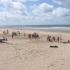 beach-09_3_3950106499_l